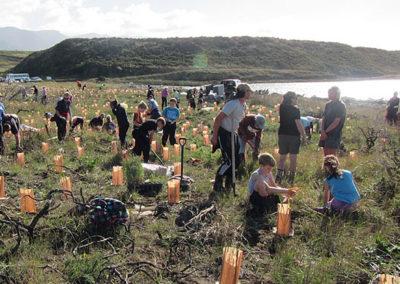 Onoke Spit Planting 2016